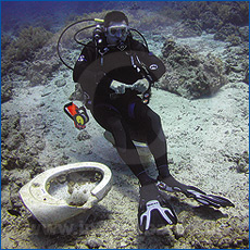 Red Sea toilet photo